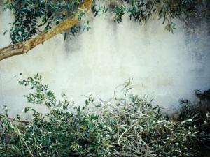sfalci-potatura borgosesia